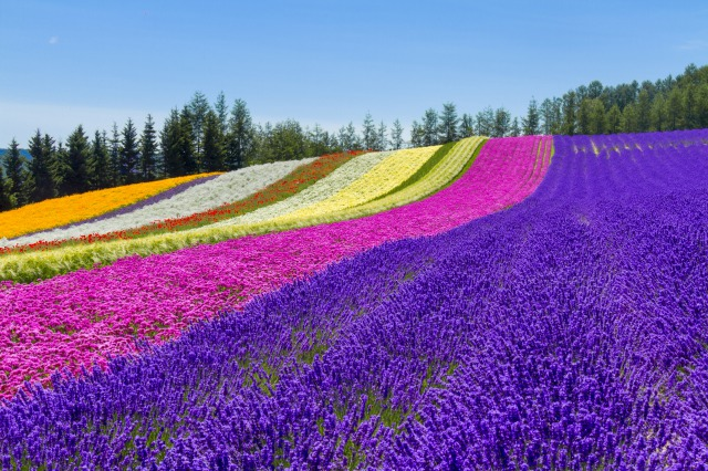 富良野の景色