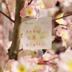 わくわく歓送迎会!~外は雪が降ってても館内には桜が咲いている件~